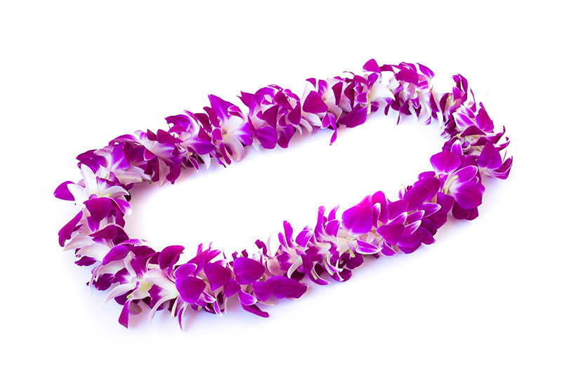 graduation day flowers single orchid lei